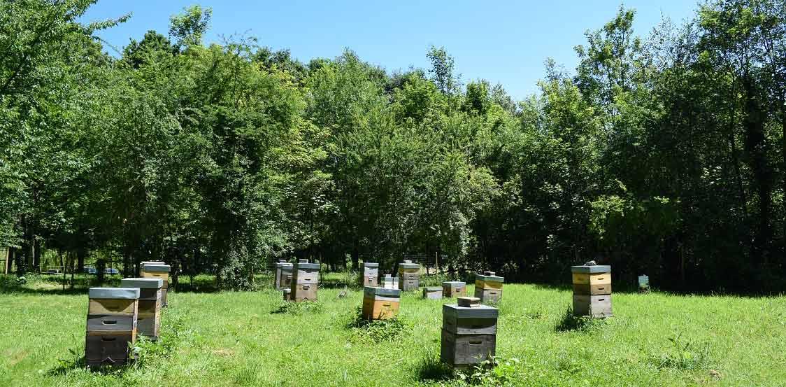 Miellerie-ruches-vigne-saint-prix-ville