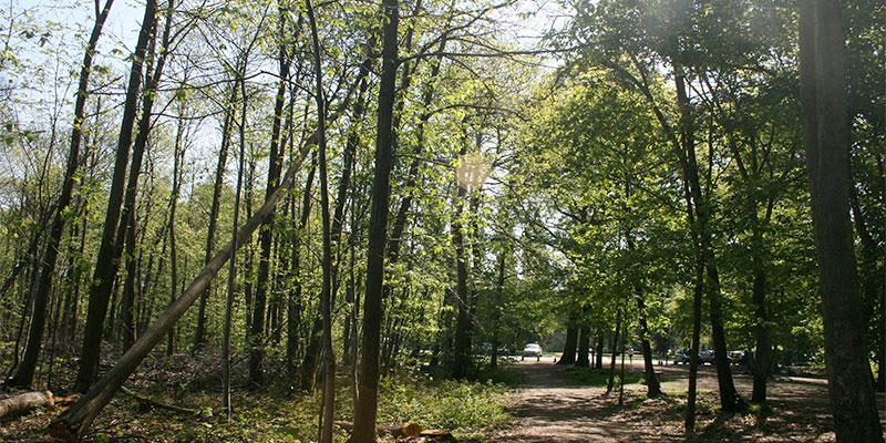La forêt de Montmorency à Saint-Prix