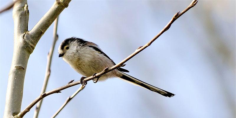 Les oiseaux à Saint-Prix