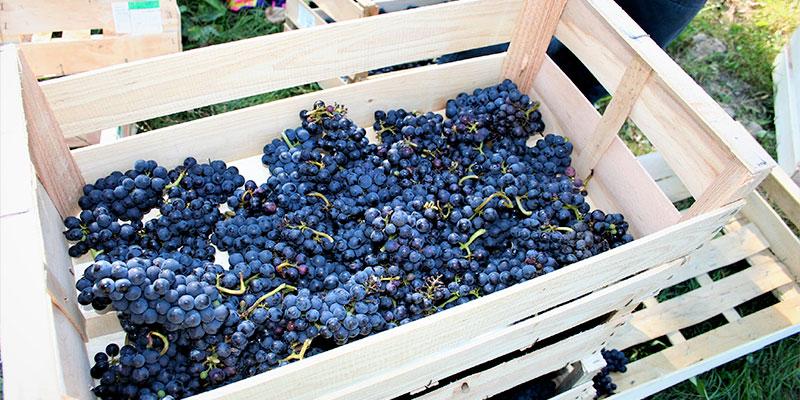 Histoire de la vigne de Saint-Prix