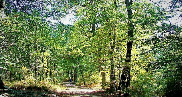 La forêt de Montmorency